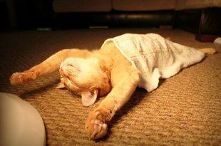صورة صور مضحكة عن النوم , نوم سلطان مضحكة جدا