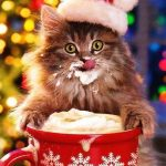 صور حيوانات مضحكة , قطط عسل اووي