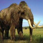 صور الحيوانات المنقرضة , كائنات لا تعيش معنا اليوم