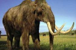 صوره صور الحيوانات المنقرضة , كائنات لا تعيش معنا اليوم