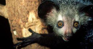 اغرب حيوانات فى العالم , حيوانات غريبة الشكل
