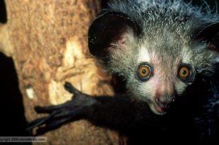 صورة اغرب حيوانات فى العالم , حيوانات غريبة الشكل