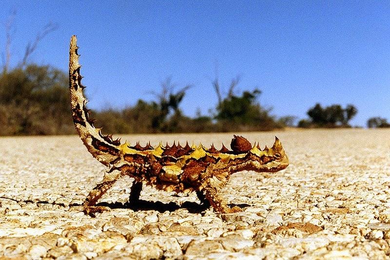 بالصور اغرب حيوانات فى العالم , حيوانات غريبة الشكل unnamed file 43