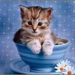 صور قطط كيوت , حيوانات اليفة وصغيرة