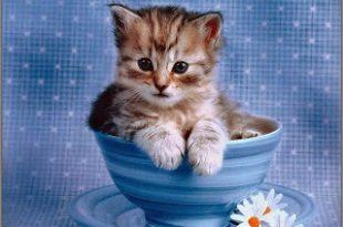 صوره صور قطط كيوت , حيوانات اليفة وصغيرة