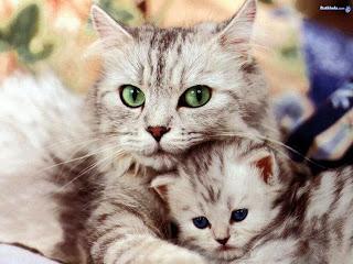 صورة صور قطط كيوت , حيوانات اليفة وصغيرة