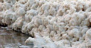 صوره صور زبد البحر , صور من الطبيعة الخلابة