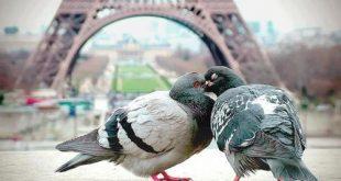 صور اجمل اللحظات الرومانسية , تشحن القلب وتجدد الامل