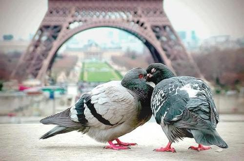 صوره اجمل اللحظات الرومانسية , تشحن القلب وتجدد الامل