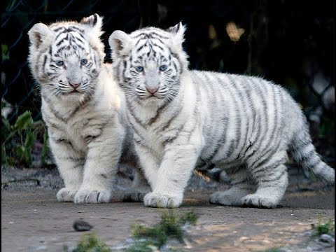 بالصور صور عن الحيوانات , طبيعة الحياة البرية 14483 1