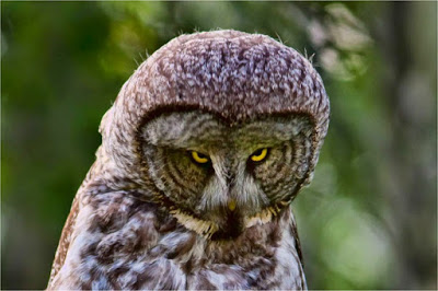 بالصور صور عن الحيوانات , طبيعة الحياة البرية 14483 2