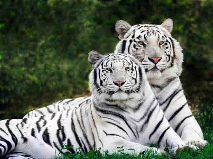 بالصور صور عن الحيوانات , طبيعة الحياة البرية 14483 3