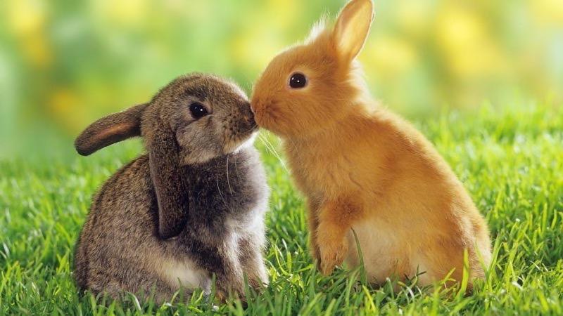 بالصور صور عن الحيوانات , طبيعة الحياة البرية 14483 4