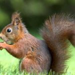 صور عن الحيوانات , طبيعة الحياة البرية