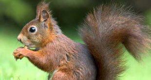 بالصور صور عن الحيوانات , طبيعة الحياة البرية 14483 6 310x165