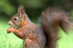 صورة صور عن الحيوانات , طبيعة الحياة البرية