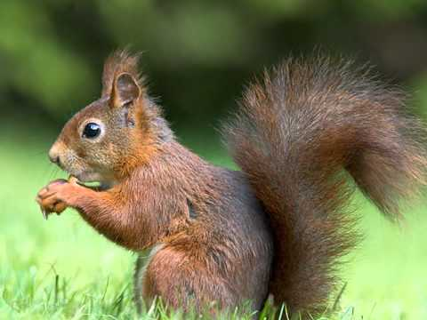 صوره صور عن الحيوانات , طبيعة الحياة البرية