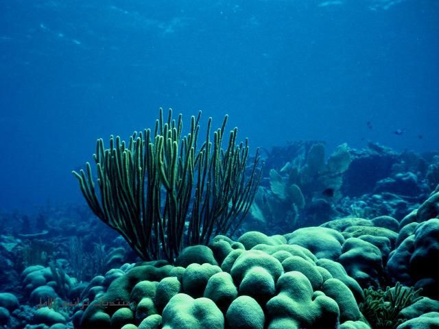 بالصور صور شعب مرجانيه , مناظر طبيعية في البحار 14490 1