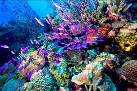 بالصور صور شعب مرجانيه , مناظر طبيعية في البحار 14490 2