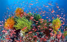 بالصور صور شعب مرجانيه , مناظر طبيعية في البحار 14490 3