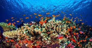 بالصور صور شعب مرجانيه , مناظر طبيعية في البحار 14490 4