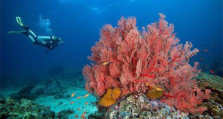 بالصور صور شعب مرجانيه , مناظر طبيعية في البحار 14490 6