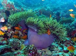 بالصور صور شعب مرجانيه , مناظر طبيعية في البحار 14490 7