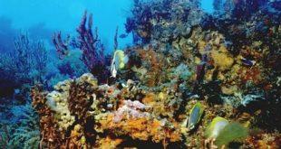 بالصور صور شعب مرجانيه , مناظر طبيعية في البحار 14490 9 310x165