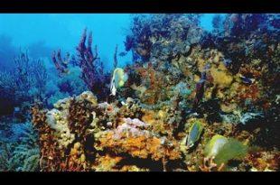 صوره صور شعب مرجانيه , مناظر طبيعية في البحار
