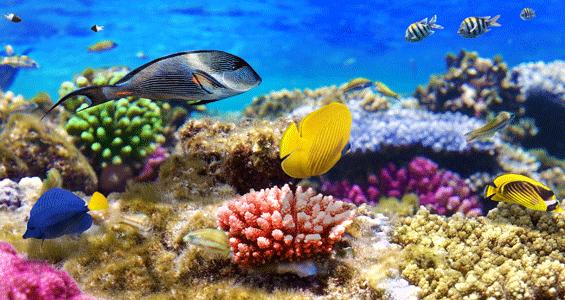 بالصور صور شعب مرجانيه , مناظر طبيعية في البحار 14490