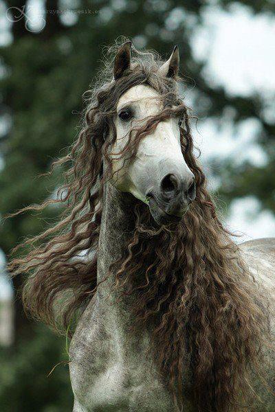 بالصور الخيول العربيه الاصيله , صور حصان عربي 10660 6