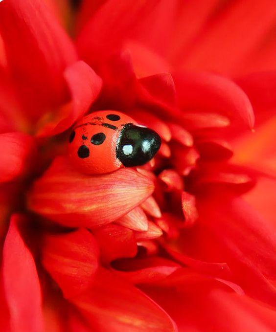 بالصور صور باللون الاحمر , قلوب ودبديب وزهور جميلة جدا 10661 8