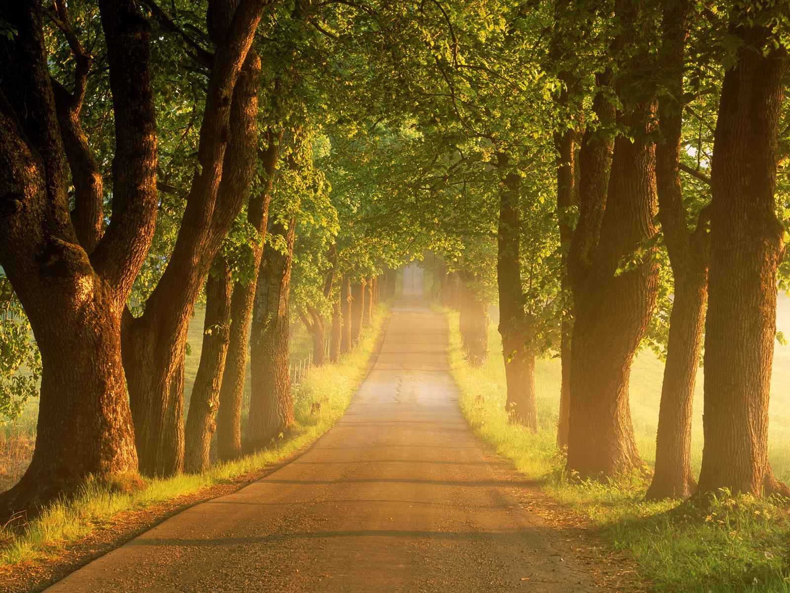 بالصور صور خلفيات طبيعيه , مناظر للطبيعة خلابة 10670 6
