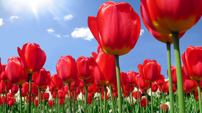 بالصور خلفيات ورود روعه , زهور عالم الجميلة 10672 9