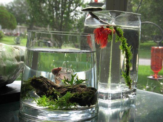 بالصور احواض سمك الزينة , مناظر خلابة من حوض الاسماك 10679 2