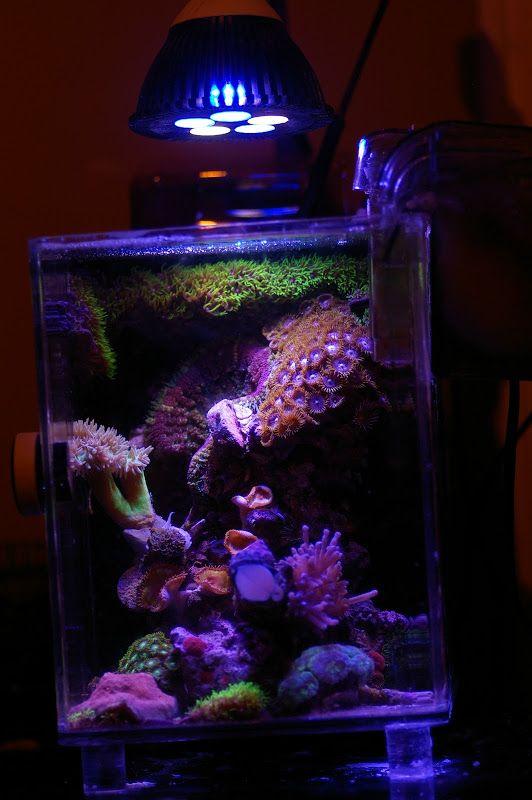 بالصور احواض سمك الزينة , مناظر خلابة من حوض الاسماك 10679 4
