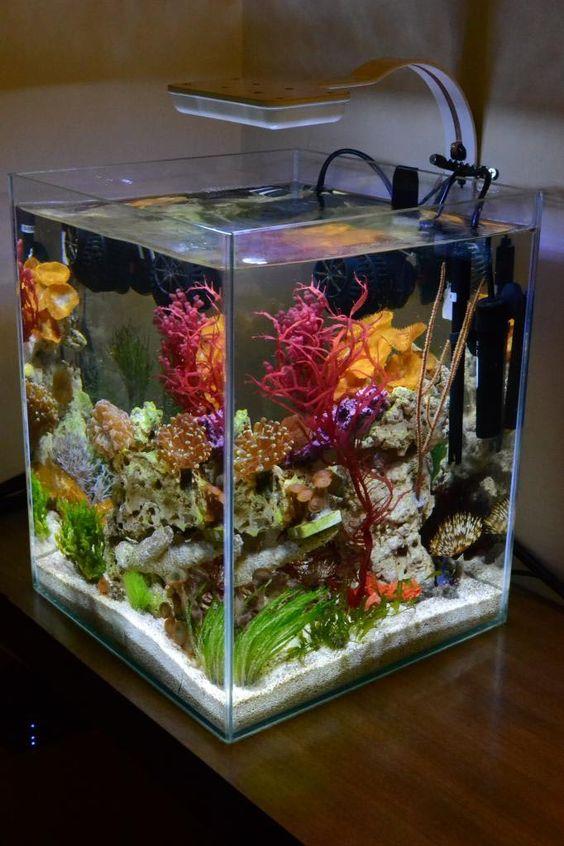 بالصور احواض سمك الزينة , مناظر خلابة من حوض الاسماك 10679 5