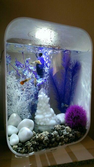 بالصور احواض سمك الزينة , مناظر خلابة من حوض الاسماك 10679 8