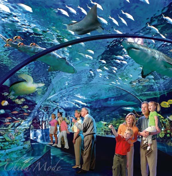 بالصور صور حوض سمك , اكبر احواض سمك عملاقة ومطاعم 10689 2