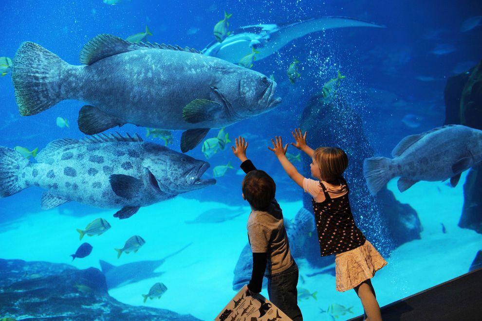 بالصور صور حوض سمك , اكبر احواض سمك عملاقة ومطاعم 10689 6