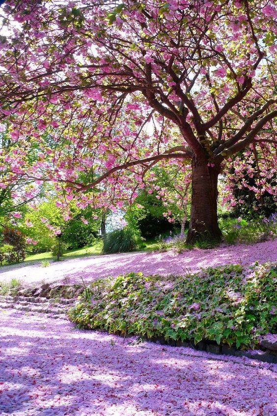 بالصور صور من الطبيعه , اجمل حدائق وشوارع ساحرة 10705 2