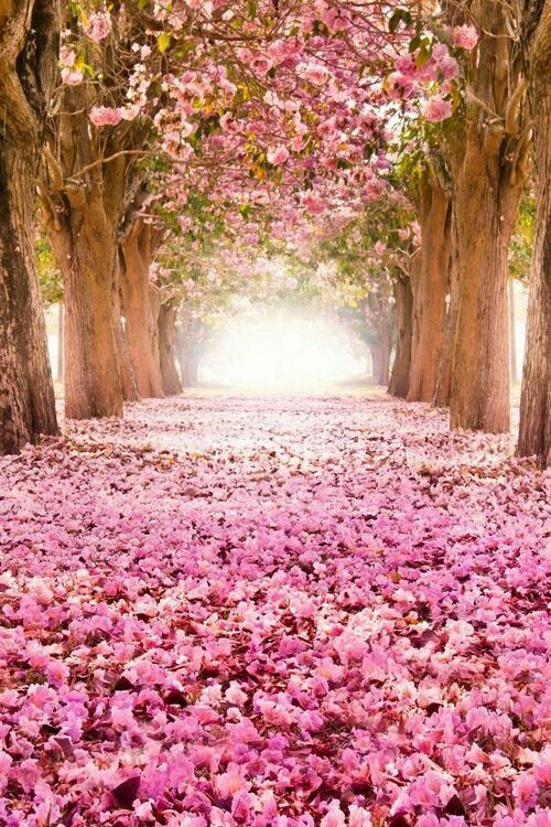 بالصور صور من الطبيعه , اجمل حدائق وشوارع ساحرة 10705 4