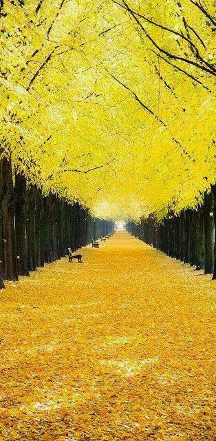بالصور صور من الطبيعه , اجمل حدائق وشوارع ساحرة 10705 5