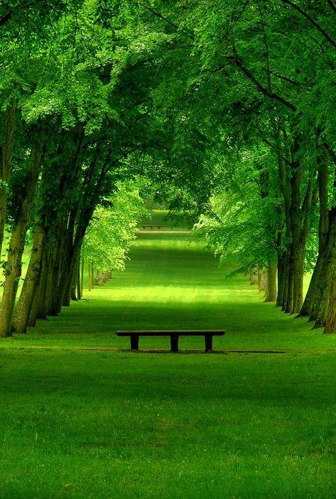 بالصور صور من الطبيعه , اجمل حدائق وشوارع ساحرة 10705 6