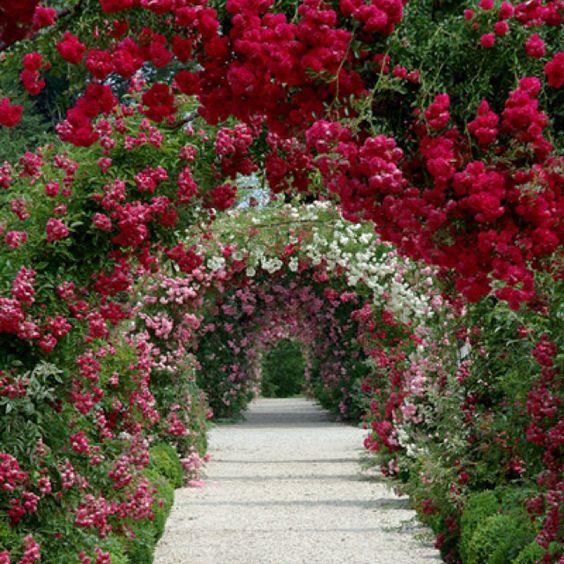 بالصور صور من الطبيعه , اجمل حدائق وشوارع ساحرة 10705 9