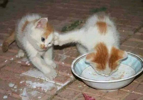 بالصور صور حيوانات مضحكة , قطط عسل اووي 10734 4