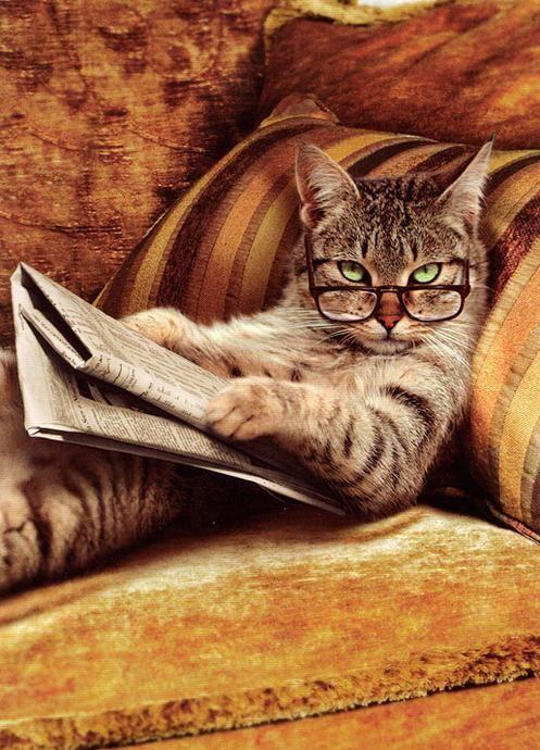 بالصور صور حيوانات مضحكة , قطط عسل اووي 10734 6