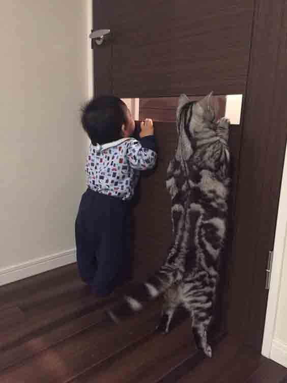 بالصور صور حيوانات مضحكة , قطط عسل اووي 10734 9