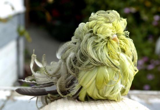صوره اغرب الطيور في العالم , اجمل طاير سبحان الله