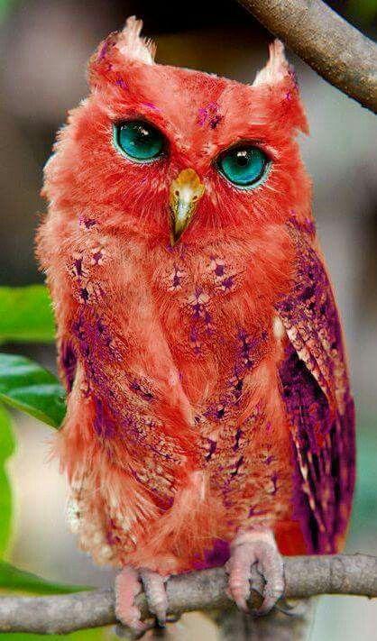 بالصور صور غريبه وجميله , سبحان الخالق اجمل طيور بالوان رائعة 10794 1